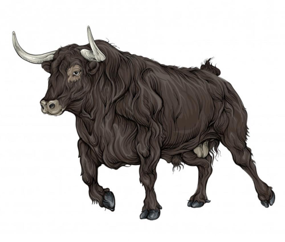 Toro? Ricerca online e servizi personalizzati